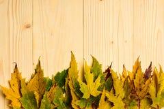 秋天下落的叶子在轻的背景的行收集了 秋季概念 在木纹理的秋天五颜六色的叶子 库存图片