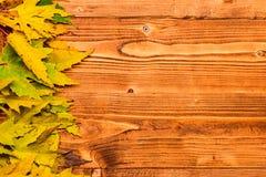 秋天下落的叶子在轻的背景,顶视图的行收集了 秋季概念 秋天五颜六色的叶子 免版税库存照片