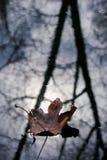 秋天下落的叶子在水中 库存图片