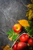 秋天下落的黄色叶子和成熟红色苹果黑暗的背景或框架  文本或照片的框架 可适用为  库存图片