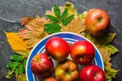 秋天下落的黄色叶子和成熟红色苹果黑暗的背景或框架  文本或照片的框架 可适用为  免版税图库摄影