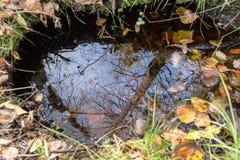 秋天下跌叶子反映水 免版税库存图片