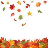 秋天下跌的叶子向量 库存照片