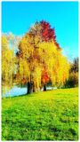 秋天下跌的草绿色留下早晨红色 库存照片