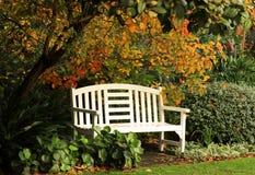 秋天下长凳结构树 免版税库存照片