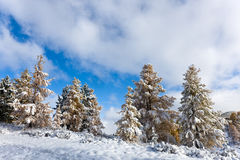 秋天下雪结构树 库存图片