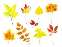 秋天不同的叶子估量xxlarge 免版税库存图片