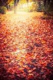 秋天与五颜六色的下落的叶子的自然公园或森林背景,室外秋天 库存照片