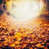 秋天与五颜六色的下落的叶子的自然背景,秋天自然 免版税库存照片