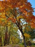 秋天与夫妇的树曲拱 免版税图库摄影