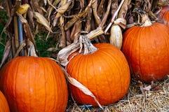 秋天与干玉米茎的收获南瓜在农村密执安,美国 免版税库存图片