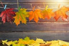 秋天与拷贝空间的构思设计与槭树叶子和sunl 免版税图库摄影