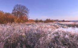 秋天与树冰的自然风景在草与清楚的蓝天的11月早晨 免版税库存照片