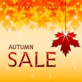 秋天与槭树叶子的销售背景。 免版税库存图片