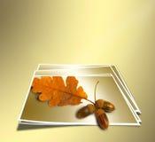 秋天与橡子的橡木分支在抽象金背景 免版税库存图片