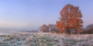 秋天与清楚的天空和色的树的自然风景 有树冰的冷的草甸在草在11月早晨 免版税库存照片