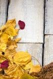 秋天与画框的叶子构成 复制空间 库存照片