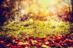 秋天与红色下落的叶子、野草和树灌木的自然背景与太阳光和bokeh 免版税图库摄影