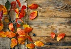 秋天与红色黄色叶子的背景分支,帆布布料 免版税库存照片