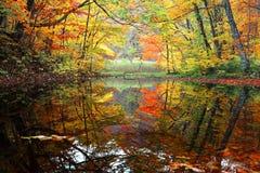 秋天与美丽的秋天叶子的沼泽风景在水反射了 免版税库存照片