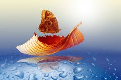 秋天与蝴蝶的板料树 免版税库存图片
