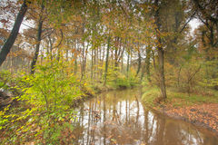 秋天与通过跑的小河的森林风景 库存图片