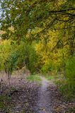 秋天与金黄叶子和美好的自然的森林风景 图库摄影