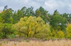 秋天与金黄叶子和美好的自然的森林风景 库存图片