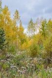 秋天与金黄叶子和美好的自然的森林风景 库存照片