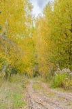 秋天与金黄叶子和美好的自然的森林风景 免版税库存照片