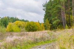 秋天与金黄叶子和美好的自然的森林风景 免版税库存图片