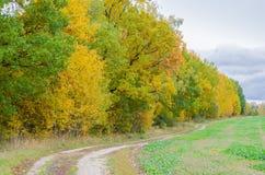 秋天与金黄叶子和美好的自然的森林风景 免版税图库摄影