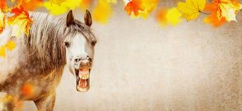 秋天与滑稽的马面孔的马背景与开放装腔作势地说的和落的五颜六色的叶子 免版税图库摄影