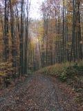秋天丛生喀尔巴阡山脉的包括的树冰孤峰最近的常设石头 免版税库存图片