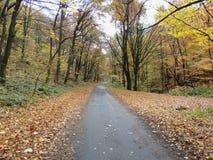 秋天丛生喀尔巴阡山脉的包括的树冰孤峰最近的常设石头 图库摄影