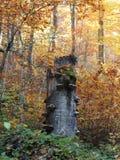 秋天丛生喀尔巴阡山脉的包括的树冰孤峰最近的常设石头 免版税图库摄影