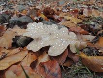 秋天丛生喀尔巴阡山脉的包括的树冰孤峰最近的常设石头 库存照片