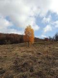秋天丛生喀尔巴阡山脉的包括的树冰孤峰最近的常设石头 库存图片