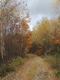 秋天丛生喀尔巴阡山脉的包括的树冰孤峰最近的常设石头 免版税库存照片