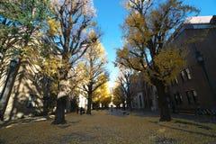 秋天东京 东京,日本大学  免版税库存图片