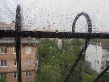 秋天丢弃横向雨豆树未聚焦的视窗 免版税库存照片