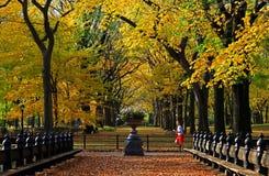 秋天中央新的公园约克 免版税库存照片