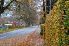 秋天丹麦路在11月在维堡,丹麦 库存图片