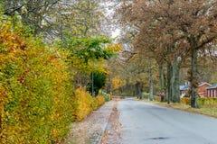 秋天丹麦路在11月在维堡,丹麦 免版税库存照片