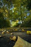 秋天为时叶子 免版税图库摄影