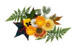 秋天主题的花卉元素,隔绝在白色背景 海运 库存图片
