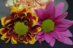 秋天之前围拢的两朵雏菊 免版税库存照片