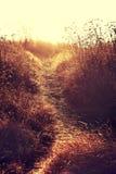 秋天乡下路通过领域用麦子 库存照片