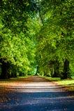 秋天五颜六色的公园结构树 库存图片