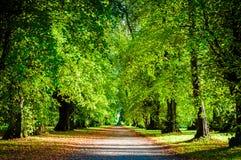 秋天五颜六色的公园结构树 免版税库存图片